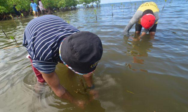 Tanam Bibit Mangrove Peringati Hari Lingkungan Hidup Sedunia, Puluhan Pemuda di Parigi Moutong Gunakan Teknik Ini