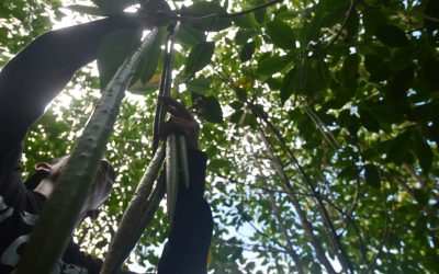 Tindak Tegas Pelaku Pembabat Mangrove, Sayutin Budianto: APH Jangan Pandang Bulu